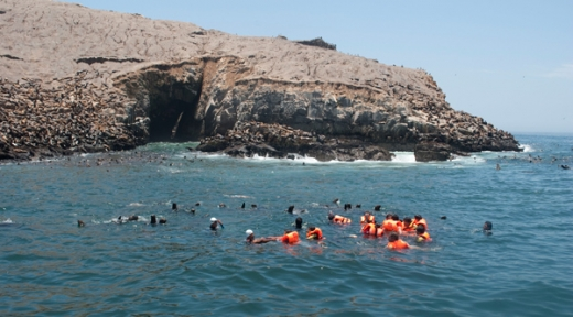ISLAS PALOMINO +  EXCURSION CON LOBOS DE MAR - DESDE: USD$85.00